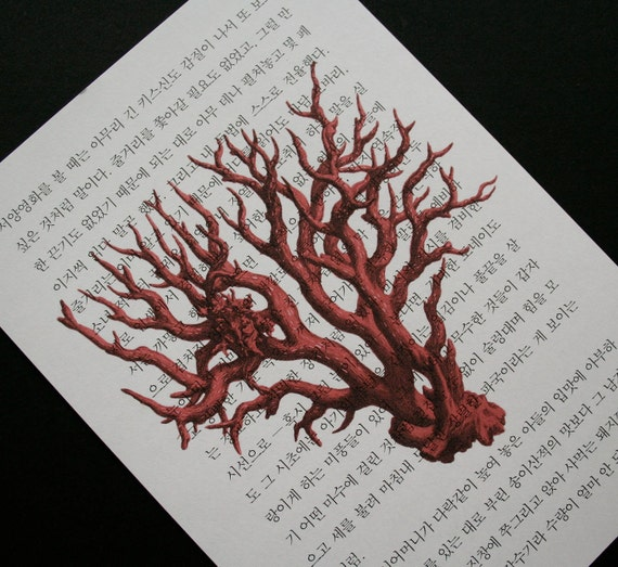Coral Print on Korean Book Page - 5 x 7 Red Coral