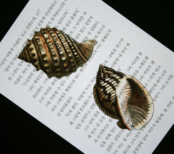 Seashells Print on Korean Book Page - 5 x 7