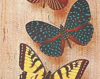 5 Vintage Playing Cards - Butterflies on Brown Board