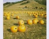 Pumpkin Patch 6x6 Photo