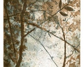 Treetop II - Original Intaglio Print