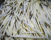 100 Porcupine Quills