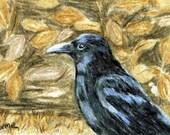 Black Bird Crow ACEO Color Pencil Reproduction 3.5 X 2.5