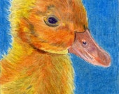 Yellow Duck Colored Pencil painting reproduction 5 x 7 Cute