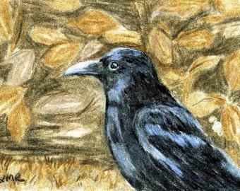 Black Bird Crow ACEO Color Pencil Reproduction 2.5 X 3.5