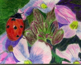 Cute Ladybug ACEO Prismacolor pencil painting reproduction