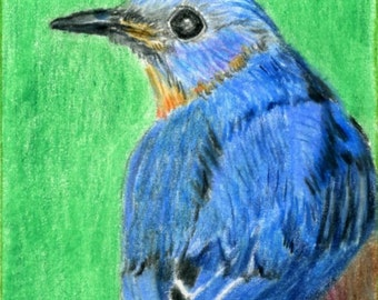 ACEO Bird Print Reproduction from Colored Pencil Painting