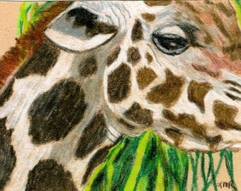 Giraffe ACEO Fine Art Reproduction Color Pencil 2.5 X 3.5 Drawing