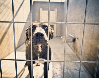 shelter dogs, no. 30