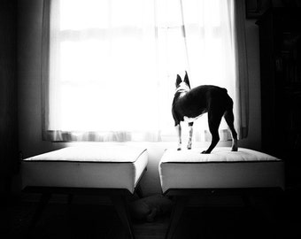 lonely dog (dog photography)