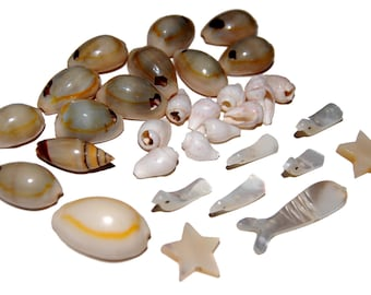 Assorted Small Shell Lot for Jewelry and Other Crafts