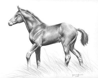 Foal - horse art print of original graphite pencil horse drawing