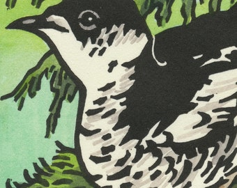 MARBLED MURRELET blank bird greeting card