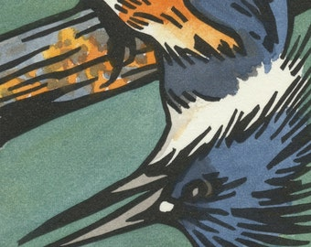 BELTED KINGFISHER blank bird greeting card