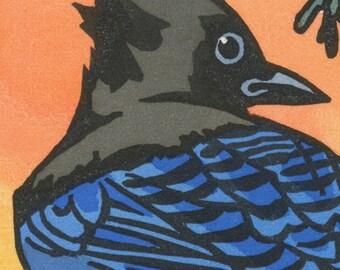 STELLER'S JAY blank bird greeting card