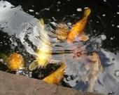 World Peace Prayer w/ complimentary koi pond photo pif
