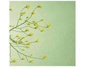 Flower art - Flower photography - Floral art - Green - Summer - Fine art photography print  - Magnolia bloom  - 5x5