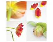 Floral art - Floral photography - Tulips  -  Fine art photography - A set of prints- red - yellow - green - 5x5