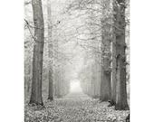 Forest art - Woodland photography - Tree art - Tree photography -  Fine art photography print  -  Black and White - 6,6x10