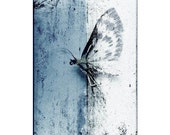 Insect art - Insect photography - Home decor - Papillon Nocturne - Fine art photograph - Fauna