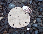 Sand Dollar and Shells - Note cards