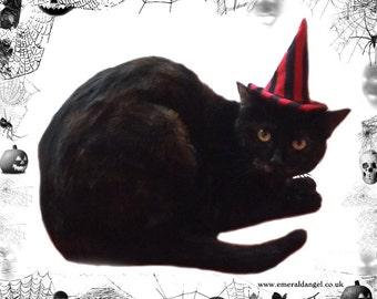 Stripes Pet Witch Hat, Halloween, Pet Costume