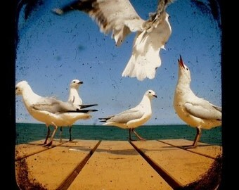Bird Photography, Bird Photo, Seagull in Flight, Flying Bird Photograph, Ocean, Coastal Home Decor TtV 5x5 Beach Nature Animal Print