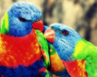 Rainbow Lorikeets Photograph 5x5 Colorful Bird Art Print Parrot Photo Bird Photography Wildlife Photograph Home Decor Animal Photography