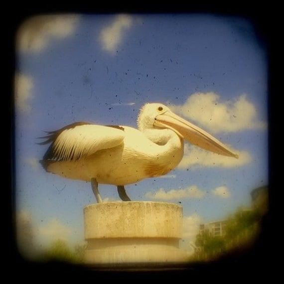 Pelican Photo 5x5 TtV Bird Photography Pelican Print Pelican Photograph Bird Print Bird Photo Bird Picture, Pelican Picture, Animal Photo