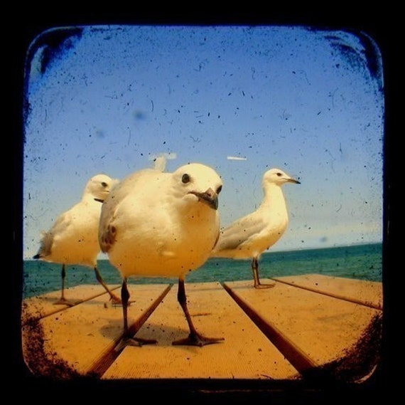 Seagull Bird Photo Print TtV Bird Photography - Nature Photography Wall Decor Seaside Birds Wildlife Home Decor Animal Photography 5x5