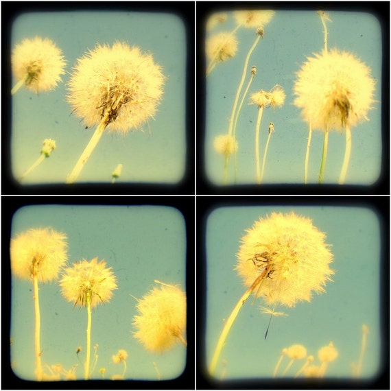 Dandelion Photo Prints TtV 5x5 Summer Flowers Powder Blue Turquoise, Fine Art Botanical Nature Photography, Childhood Nostalgia, Wall Decor
