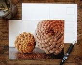 Sale Pine Cone Postcard Set