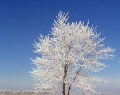 Snow Tree 3, Blank Greeting Card