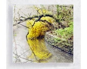 Suddenly, Spring -  Forsythia Blooms  on 5x5 Canvas Print over Wood Frame - Nature Still Life - Wall Art - Home Decor