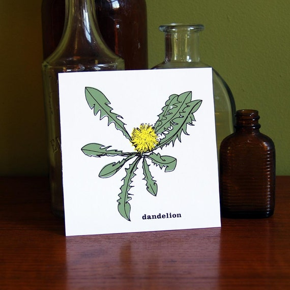 Dandelion Print from the Wild Edibles Series