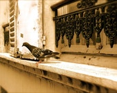 ON SALE 20% OFF A Pigeon in Paris-8x10 Photograph