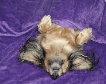 Dog Bed - Cats - Pets - Snuggle Sack - Purple Passion with Winter White Feathered Fur - Includes Embroidered Personalization