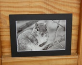 Caught In the Act  - Black and White Matted Photo - ON SALE