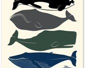 A Cetacean Study