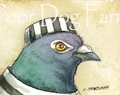 ACEO signed PRINT - JAILBIRDS - Inmate n0. 3-  Pigeon
