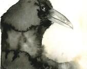 Black Raven  Wash 5x7