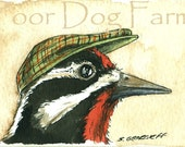 ACEO signed PRINT - Red-naped Sapsucker in a hat -