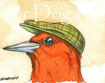 Red Headed Woodpecker in a hat - 5 x 7 print