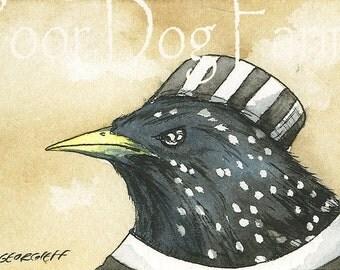 JAILBIRDS - Inmate n0. 2-  Starling - 5 x 7 print