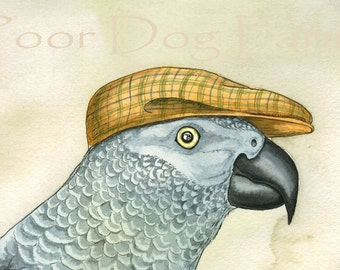 ACEo signed PRINT - A Dapper African Gray Parrot