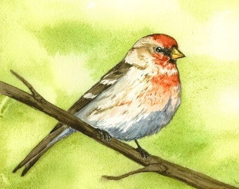 Red Finch Print