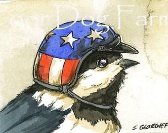 Chickadee in biker helmet 5 x 7 print