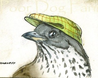 Thrush in a Hat - 5 x 7 print