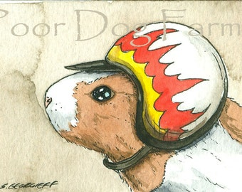 ACEO signed PRINT - Guinea pig in a helmet