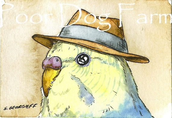 ACEO signed PRINT - Mr. budgie in a hat